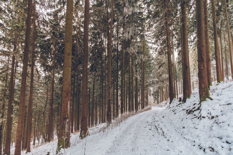 Taunus Highlands Frankfurt Am Main Nature Photography Taunus Highlands Wintertime Beauty In Nature Cold Temperature Day Forest Forestwalk Landscape Nature No People Outdoors Road Scenics Snow Snowing The Way Forward Tranquil Scene Tranquility Tree Weather Winter