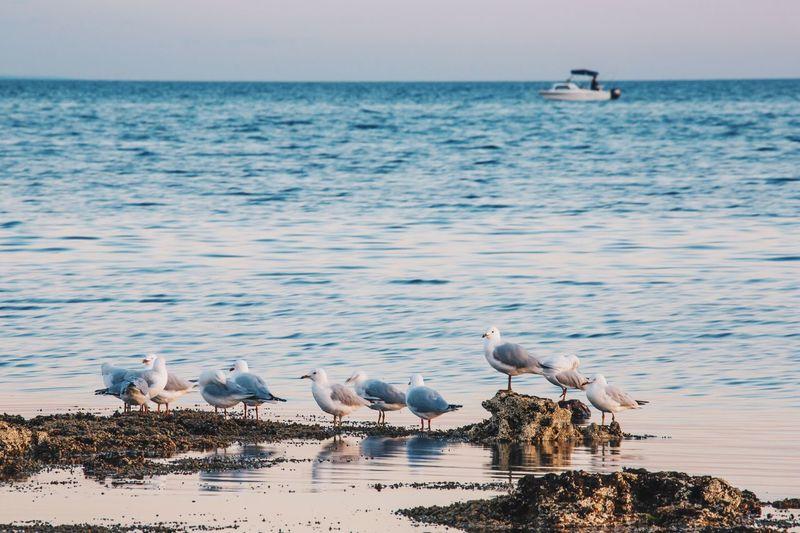 Seagulls perching on rock at sea