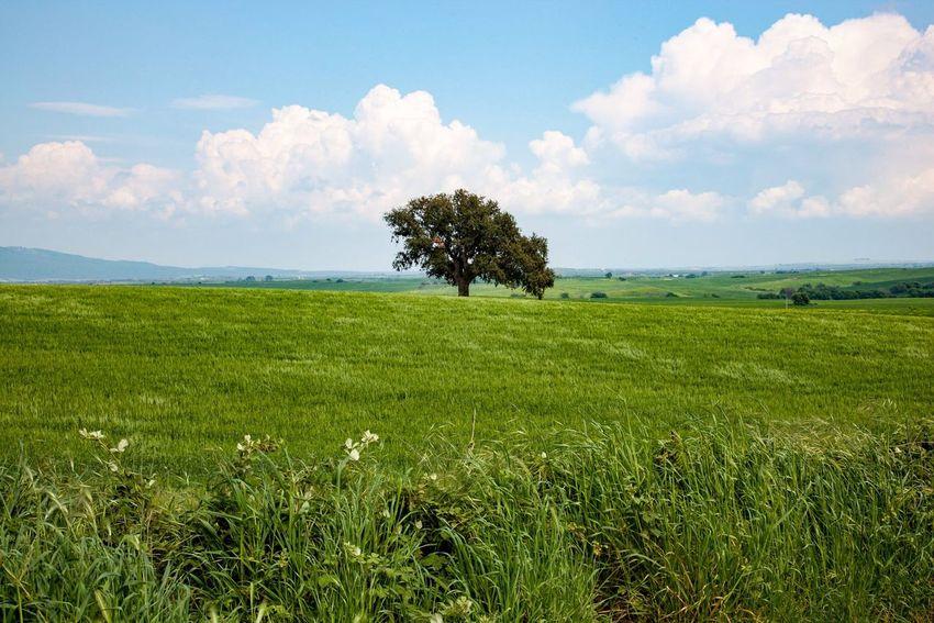 Lazio, Italy. Italy Italia Landscape Tree TreePorn Colors