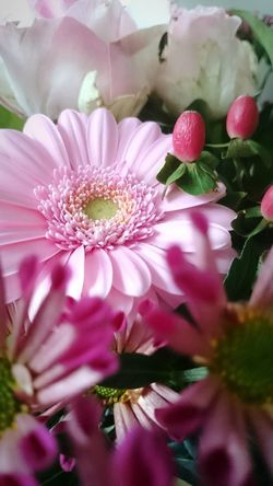 Flower Fragility Pink Color Nature Beauty In Nature Flower Head No People Close-up Beauty Gerber Just Flowers Petal Freshness Plant Growth Outdoors Full Frame Day Millennial Pink