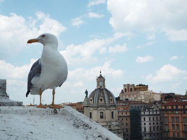 A silent tourist Animal Animal Photography Summer Rome Sky And Clouds Skyline EyeEm Selects Bird Sky Cloud - Sky Seagull Sea Bird