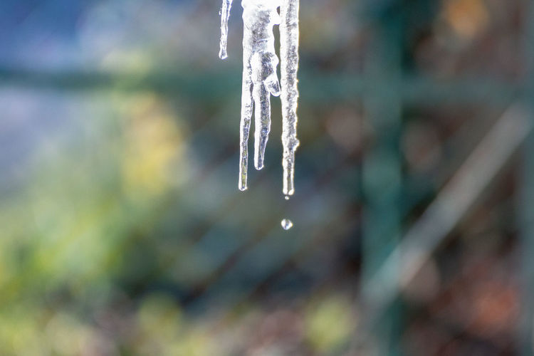 Close-up of icicles hanging from plant