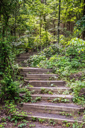Forest Going Up Green Growing Hiking Hiking Trail Jungle Nature Path Less Traveled Peaceful Road Less Travelled Stairs Stairway Steps Sunlight And Shadow Tranquil Scene Tranquility Trees Trees And Nature Up Woods