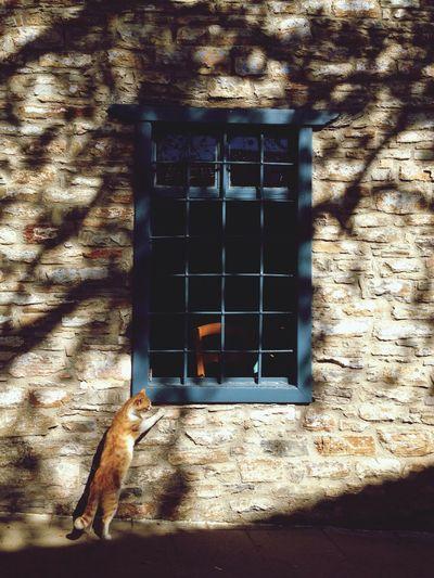 Exploring Cat Curiosity Light And Shadow