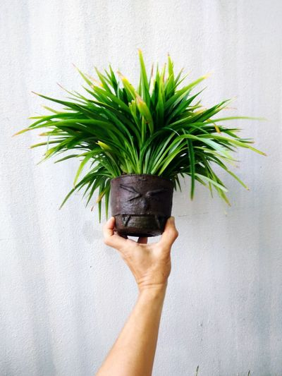 Close-up of hand holding potted plant against wall