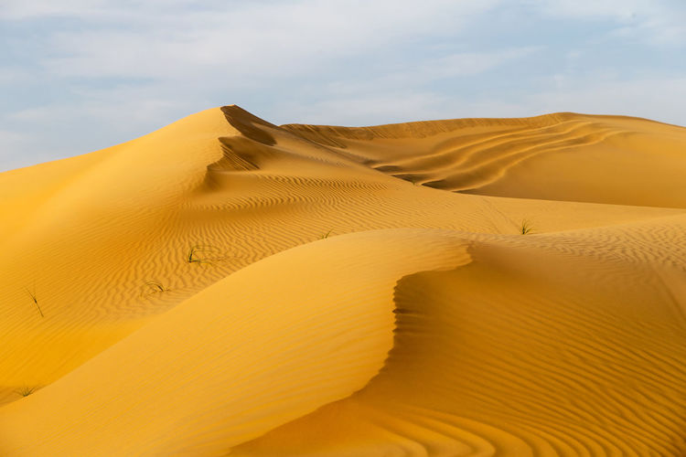 Beautiful sand dunes in the desert in united arab emirates