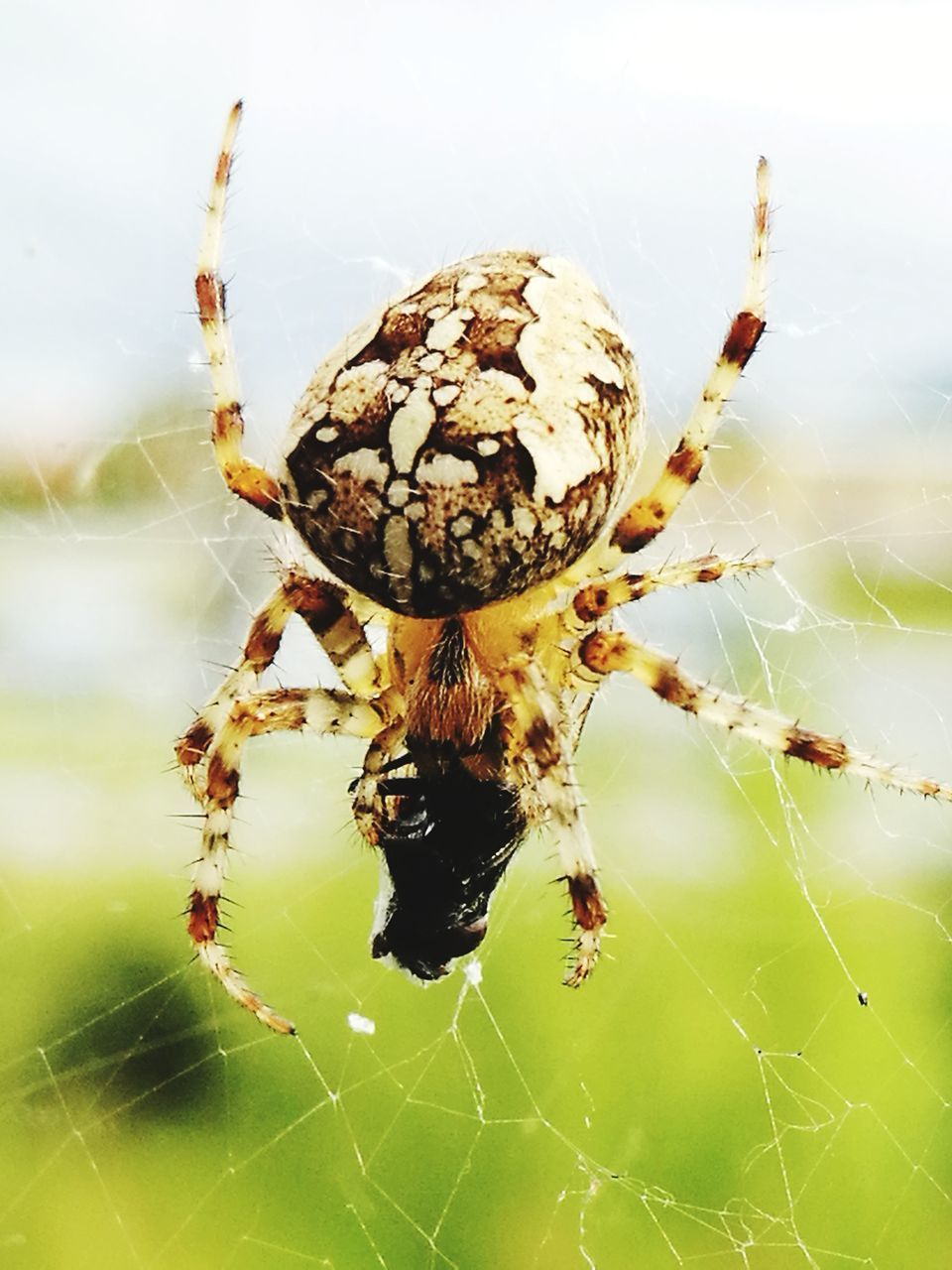 spider, spider web, animal themes, one animal, animals in the wild, focus on foreground, web, close-up, nature, survival, day, insect, outdoors, animal leg, no people, animal wildlife