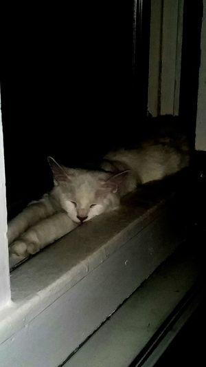 Sleepy Boy Cat