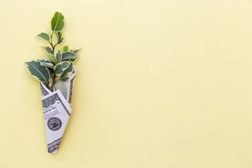 a green plant is wrapped in a hundred-dollar bill on a colored background Flat Lay Nobody No People Sprout Yellow Business Life Plant Prosperity Revenue Rich Wages Wrap Abundance Background Colorful Copy Space Dollar Dollars Earnings Finance Financial Income Investment Leaf Money Profit Success Wealth Wrapped