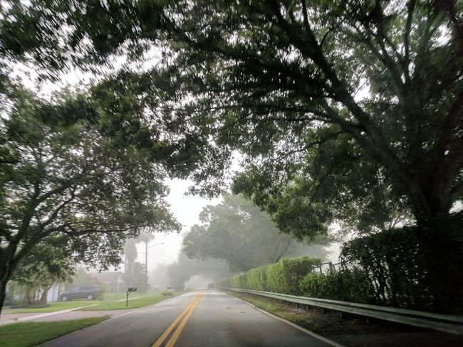Tree The Way Forward Road Outdoors Street Day No People Nature Branch Sky Beauty In Nature EyeEmNewHere
