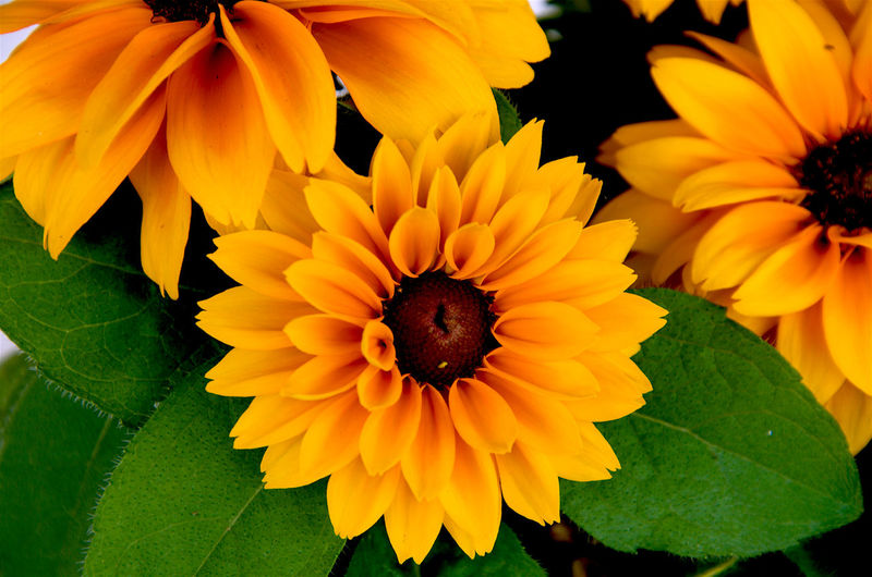 Orange dahlia Animal Themes Animals In The Wild Beauty In Nature Bee Blooming Close-up Dahlia Flowers Day Flower Flower Head Fragility Freshness Growth Insect Leaf Nature No People One Animal Outdoors Petal Plant Pollen Yellow