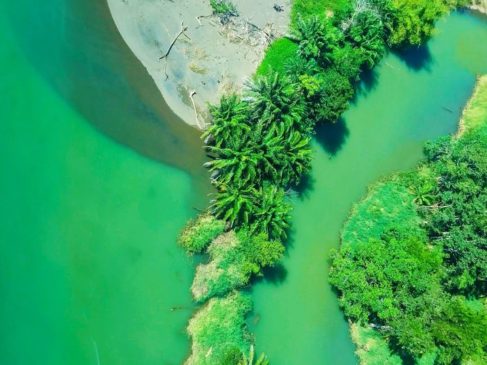 Aerial Photography Aerial View Adventure Explore Travel I Love Travel Costa Rica Monochrome Verde Tropical Rainforest Nature High Angle View Green Color Beauty In Nature No People Tranquil Scene Day Tranquility Scenics Outdoors Plant Growth Tree Lake Mountain Sky