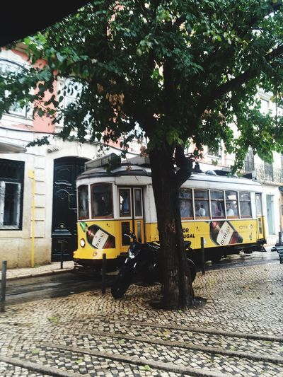 Lisbon Lisbon - Portugal Yellow Tram Nostalgia Team And Tree Travel Tram 28 Tree Mode Of Transport Day Outdoors Team And Tree Travel Tram 28 Tree Mode Of Transport Day Outdoors No People