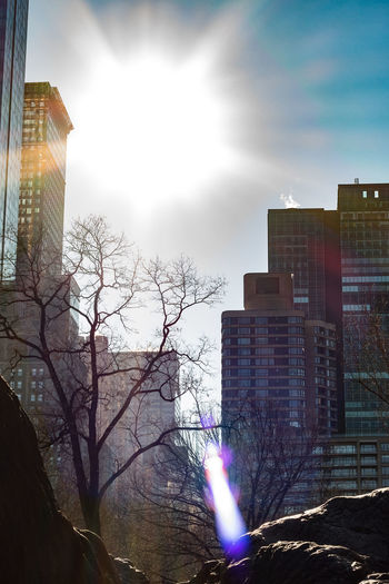 Built Structure City Nature Central Park Building Exterior Architecture Sky Lens Flare Tall - High Skyscraper Bare Tree Office Building Exterior Office Tree Outdoors Sunlight Building Cloud - Sky Sunbeam Apartment No People Sun Modern Day
