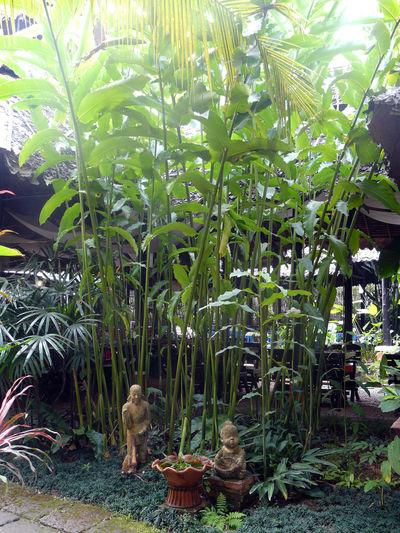 Sunny Patio Greenery Sunlit No People Plant Green Statuettes VerdureCour Interieure Patio Ensoleillé -In Thailand