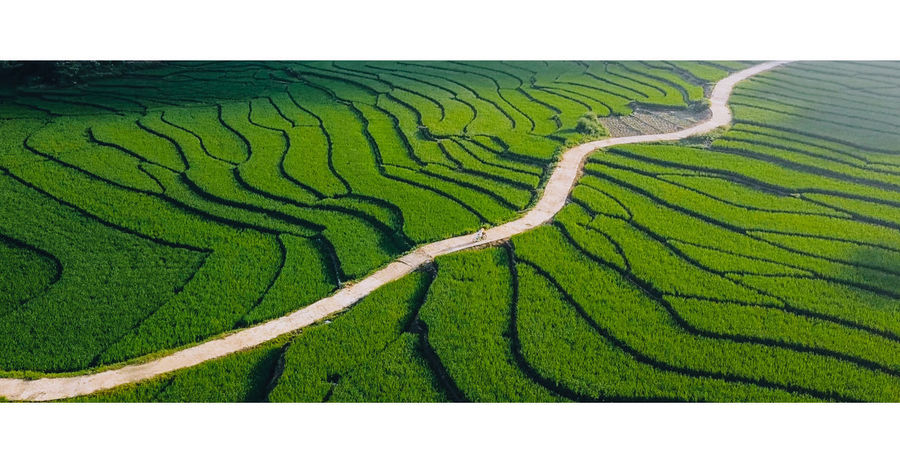 In the right place at the right time Aerial Shot Been There. Vietnam Aerial Photography Agriculture Beauty In Nature Been There, Done That Day Drop Field Green Color Growth Hagiang Landscape Mavic Nature No People Outdoors Rice Paddy Rural Scene Scenics Tea Crop Terraced Field Vietnam Trip Vietnamphotography