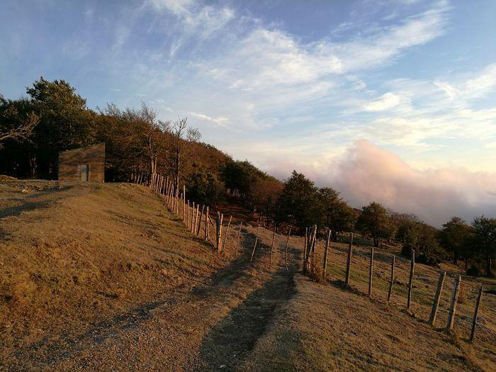 Cesarò-nebrodi Agriculture Cloud - Sky Rural Scene No People Tree Outdoors Food Sky Nature Day