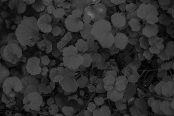 Nature Textured  Autumtrees Blackandwhite Close-up Contrast Depth Groundcover