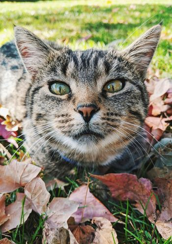 Looking At Camera One Animal Portrait Domestic Cat Feline Nature Animal Themes Day Outdoors Mammal No People Close-up Grass