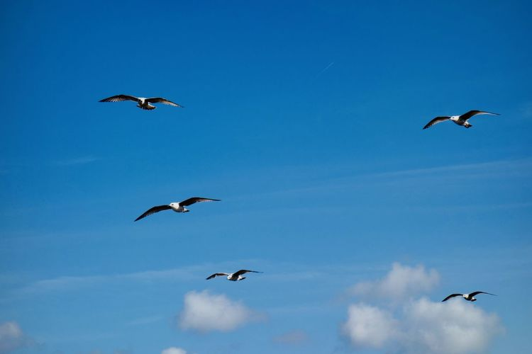Five doves flying through blue sky at north sea coast. Background Texture Background Coast Seascape Landscape Bird Doves, Birds Dove Blue Sky Sea Animals In The Wild Animal Themes Animal Wildlife Bird Sky Vertebrate Group Of Animals Animal Flying Spread Wings Blue Low Angle View Mid-air No People Nature Day Motion Freedom Medium Group Of Animals Beauty In Nature