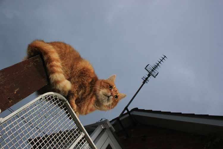 Low angle view of cat on fence