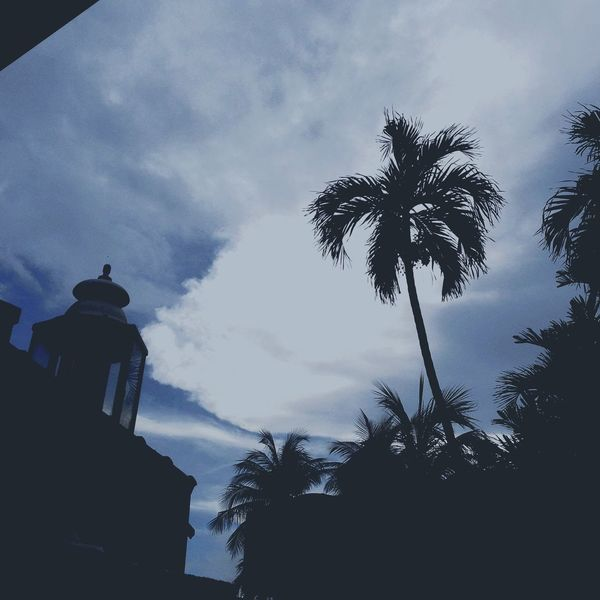 Silhouette No People Sky Building Exterior Built Structure Day Nature Outdoors Low Angle View Palm Tree Architecture Close-up Mode Of Transport Architecture City Transportation Old Skool Cadi Road Sign Cloud - Sky First Eyeem Photo Road Car Text Yeah. Tree