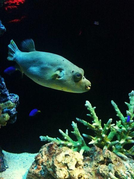 Ancient fish Ancient Civilization Fish Nature Sea Water Aquarium Coral Beauty In Nature Animal Wildlife Day No People EyeEmNewHere