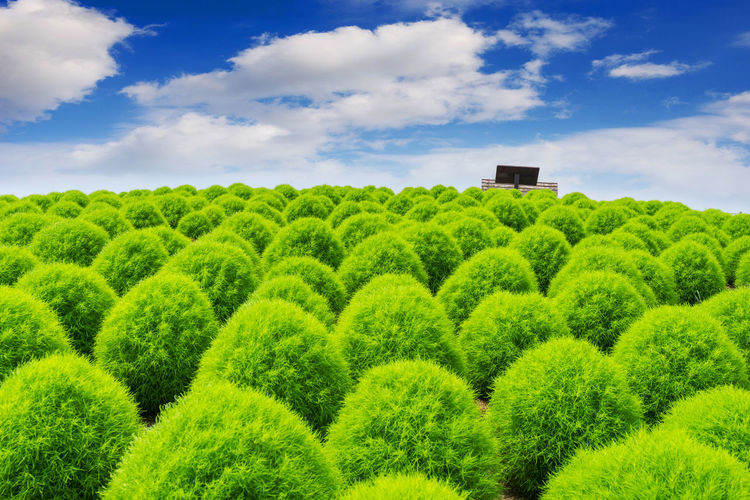Scenic View Of Bushes Growing On Field Against Sky