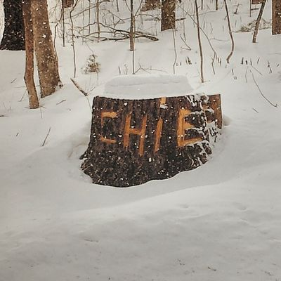 This appeared after crews were trimming trees down Rt 15 between Underhill and Cambridge. I can only assume it says Chief. Oh, the things you see in Vermont. Latergram Vt Vtphoto Vermont vermontshots vscocam vsco vscogood vtbyways greenmountainstate