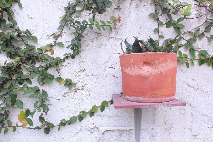 a pot on the