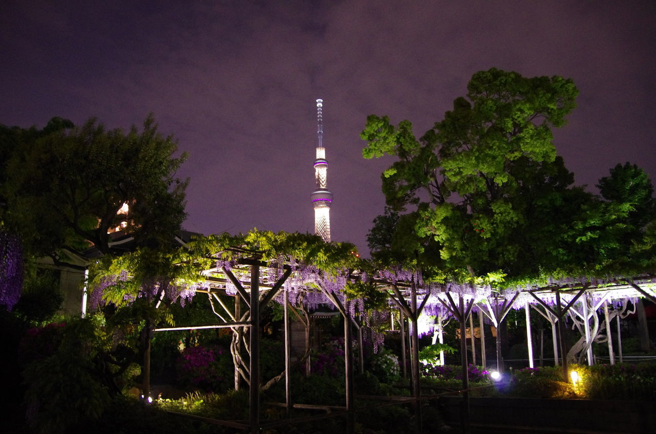 LOW ANGLE VIEW OF ILLUMINATED TREES AGAINST SKY