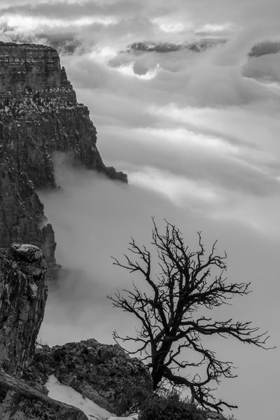 """""""Bare Tree on Cliff"""" Tree Nature Cloud - Sky Sky Outdoors Mountain Scenics Landscape Foggy Geology High Contrast Grand Canyon National Park Winter Travel Photography Travel Tree Nature National Park Arizona Grand Canyon, South Rim Fog Grand Canyon Foreground Vacations Solitary"""