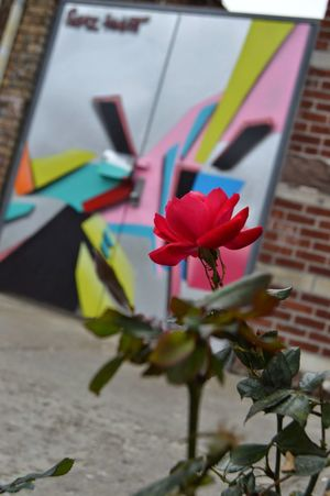 My Favorite Photo Photo I took in Bushwick,Brooklyn. Love this shot because of the focus of Natural Art [The Rose] Vs the backdrop of StreetArt. When in the City you can see both forms of Art can co-exist. Natural Art  Streetart Concrete Jungle City Flower Graffiti Art Nyphotography