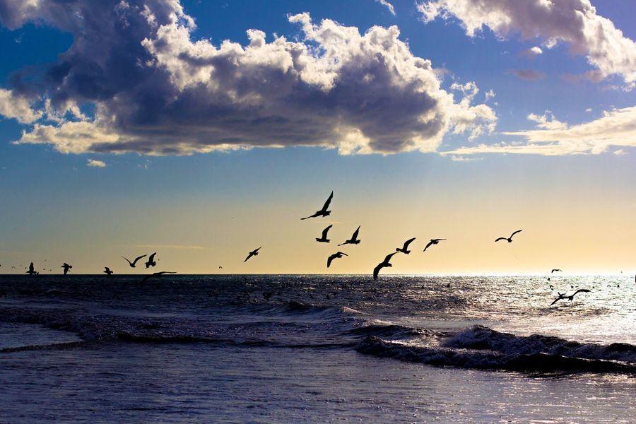 SãoMigueldoGostoso Beach Praia Colour Of Life