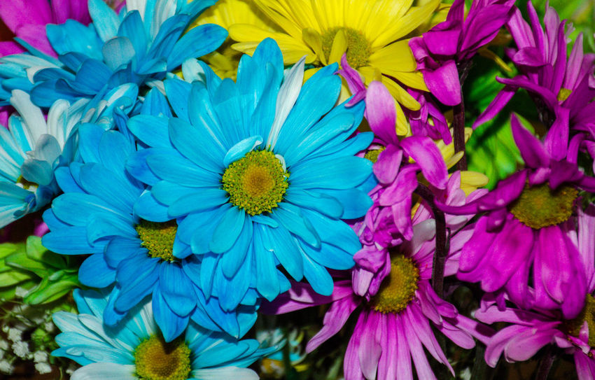 Beauty In Nature Blooming Blue Close-up Day Flower Flower Head Fragility Freshness Full Frame Growth Nature No People Outdoors Petal Plant Purple Springtime Yellow 10