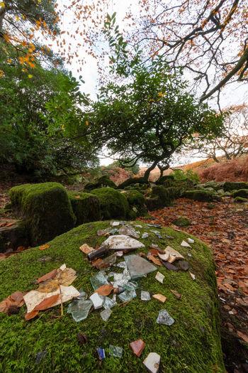 Autumn Walk Found Objects Ruins Autumn TreePorn Bracken Clouds And Sky Fall Season  Long Exposure Riverside Dartmoor Autumn Collection