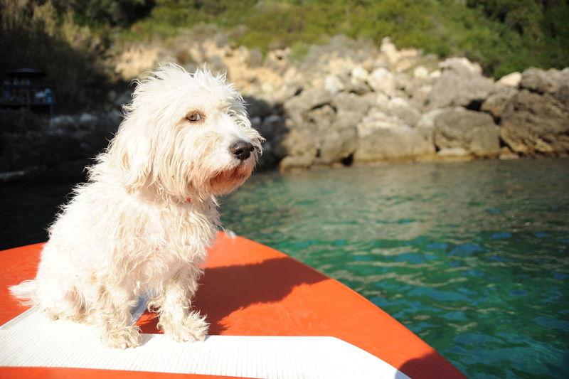 Dog adventure in Corfù island, Greece CORFU ISLAND Dogs Corfu Dog Dog Adventure Dog Love Dog On Boat Dog On Train, Dog Travel Dog Traveller Dogslife Greece Pets