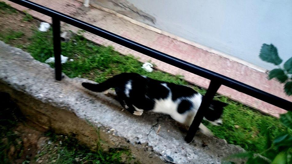 Blackandwhitecat Bluredmotion Cat Therunningcat