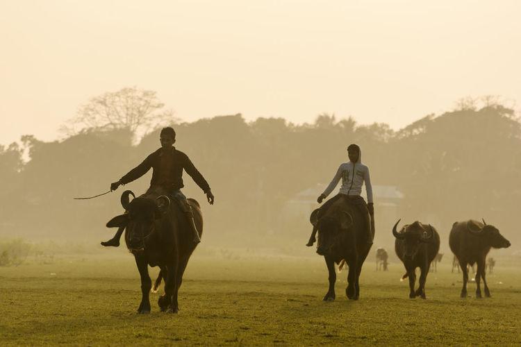 Man riding horses on field against sky