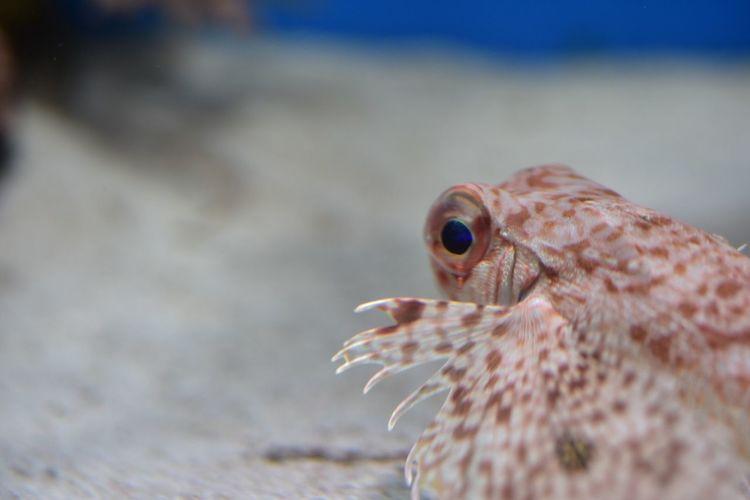 Close-up of lionfish in aquarium