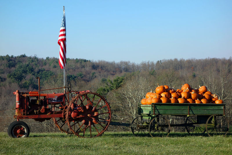 Agriculture Flag Nature No People Outdoors Pumpkins Rural Scene Sale Stars And Stripes Flag Tractor USA