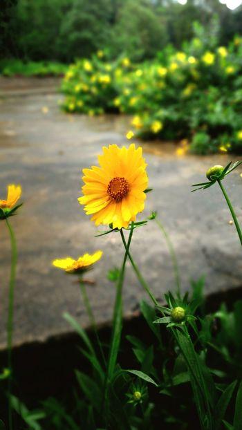 """"""" Tamed wild flower """" Open Edit Flower Wild"""