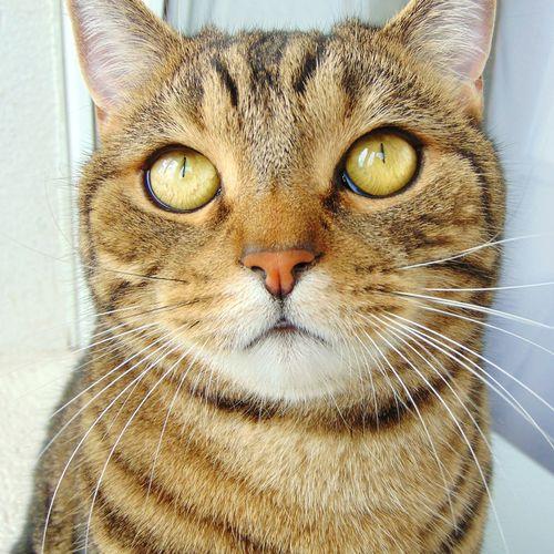 кот котэ котэйка усатик няша лапа пупсик Киса😇😸😻 Cat Eyes