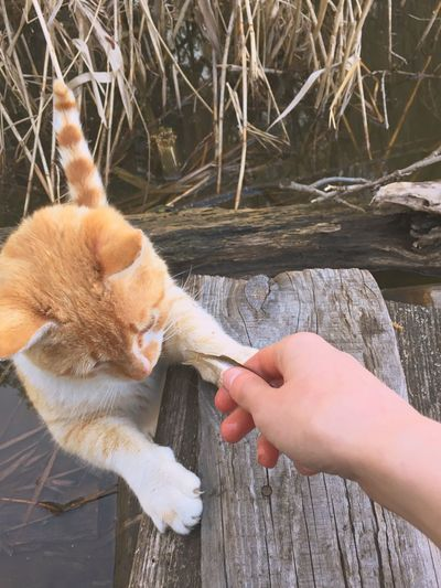 Cats Cat♡ Cat Lovers Human Hand Hand One Animal Pets Domestic Domestic Animals Pet Owner Care Personal Perspective