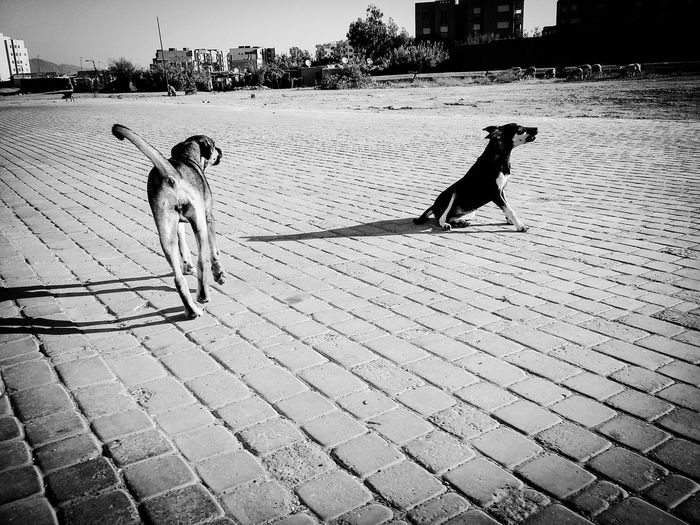 Dog Animal Themes Keep Calm And Shoot A Foto 📷 This Time... 43 Golden Moments Hello World Diver El Masso City Life Morning Taking Photos EyeEmBestPics Blacj And White Animal Themes Domestic Animals Dog Mammal Pets One Animal Day Footpath Zoology Outdoors Animal Behavior Outline Monochrome Photography