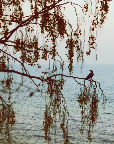 Tree Bird Sea Landscape_Collection Beutiful  Mist Photo