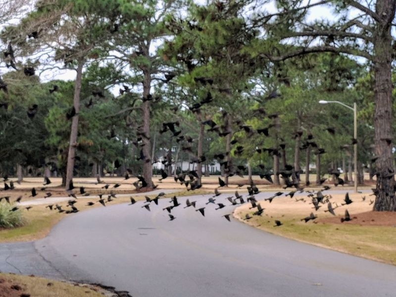 flock of birds flying across the street Large Group Of Animals Animals In The Wild Bird Tree Animal Themes Water Animal Wildlife