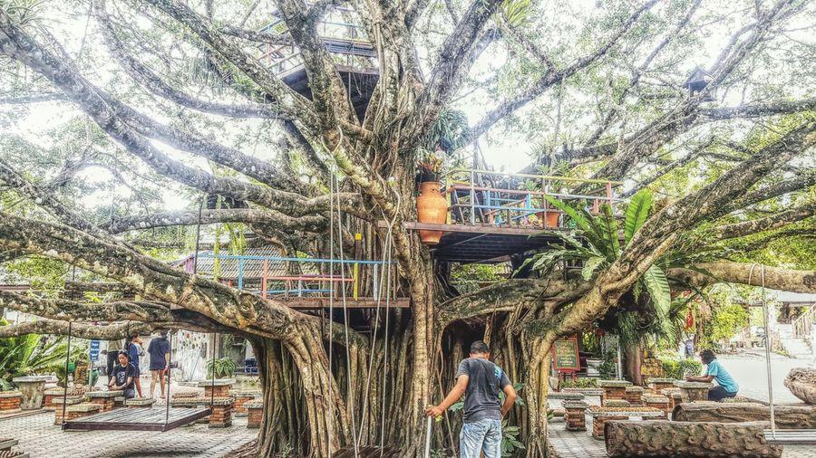 ธรรมชาติ Tree