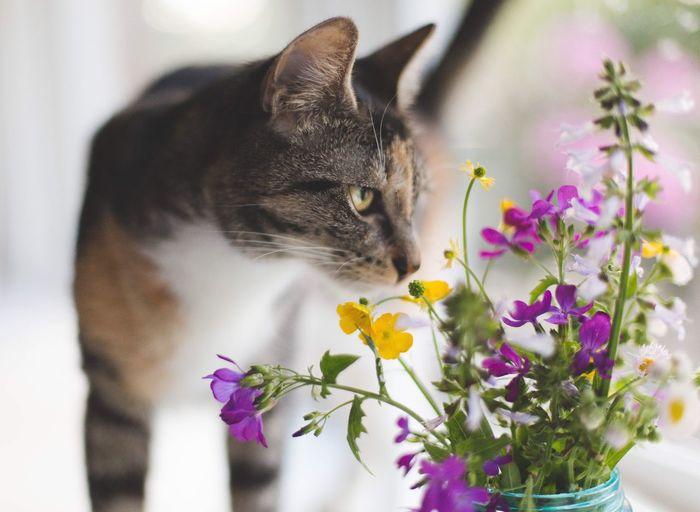 Close-up of cat sitting on purple flower