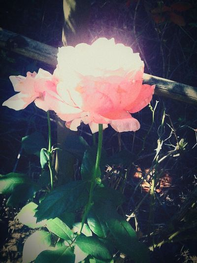 Flower Pink Color Nature